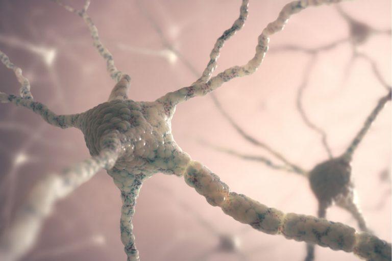Endokanabinoidni receptorji