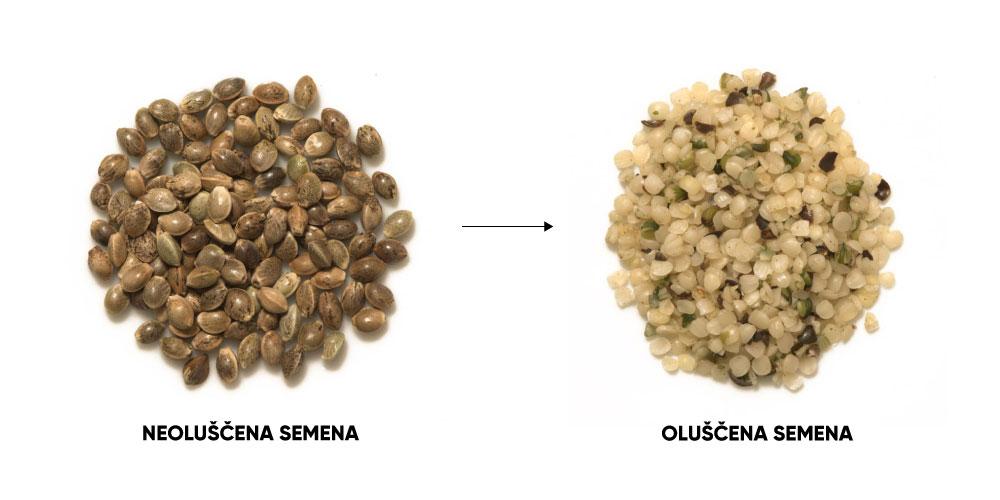 neouluscena in oluscena konopljina semena